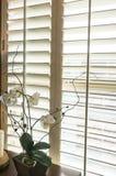 De houten blinden van de aanplantingsstijl in nieuw huis Stock Fotografie