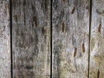 De houten boom van de detailstextuur met groot oog en schaduwhuidbeeld als achtergrond royalty-vrije stock foto