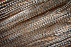 De houten Boomstam van de Textuur Oude Boom Stock Foto's