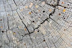 De houten boorders vallen op oude houten straal aan stock foto's