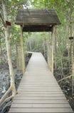 De houten brug van de manier in mangrovebos Royalty-vrije Stock Afbeelding