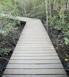 De houten brug van de manier in mangrovebos Stock Foto