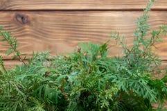 De houten ceder van Thuja van de achtergrond nieuwe jaarprentbriefkaar Groene royalty-vrije stock afbeeldingen