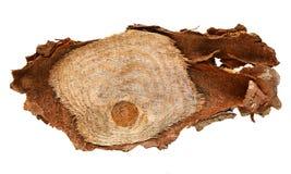 De houten die logboekplak cutted boomboomstam op witte, hoogste mening wordt geïsoleerd Royalty-vrije Stock Foto