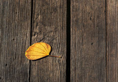 De houten donkere bruine textuur Als achtergrond en oude men verlaten de herfst Stock Fotografie