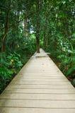 De houten gang die van de plankraad in een tropisch bos leiden Stock Fotografie
