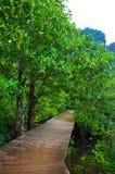 De houten gang die van de plankraad in een tropisch bos leiden Royalty-vrije Stock Afbeeldingen