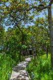 De houten gangmanier op Moutain bij het Nationale Park van Pahin Ngam royalty-vrije stock foto
