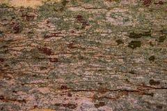 De houten geweven achtergrond van de boomschors Stock Foto's