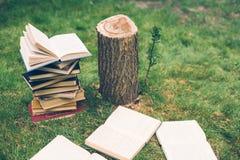 De houten handen houden een boek over bomen Malplaatje voor uw ontwerp Concept ontbossing Stock Foto