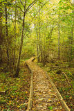 De houten het inschepen weg van de wegmanier in de herfstbos Royalty-vrije Stock Foto's