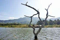 De houten karkassen op water en blauwe hemel wijst op de oppervlakte in Srinakarin-dam Stock Afbeeldingen