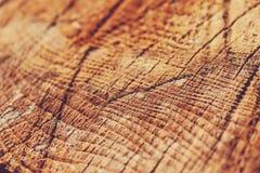 De houten knipselstam belt close-upachtergrond of textuur stock foto's