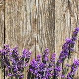 De houten Lavendel bloeit Achtergrond Stock Foto's