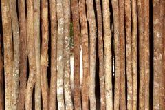 De houten muur van boomstammen in het huis van de regenwoudwildernis Stock Foto