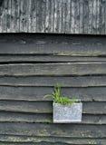 De houten Muur van de Schuur met Installaties Stock Fotografie