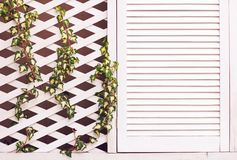 De houten muur van de latwerkvoorgevel met jonge wevende klimopinstallatie Stock Fotografie