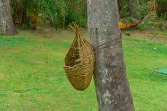 De houten papiermand die op boomboomstam hangen royalty-vrije stock fotografie