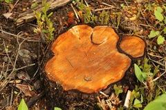 De houten snijder van de mos wilde Aard stock fotografie