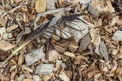 De houten spaanders demonstreren een vogelveer Stock Afbeeldingen