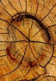 De houten textuur, kan gebruik zijn als achtergrond Stock Afbeelding