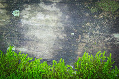 De houten textuur, met doorstaan ziet, oud en groen mos eruit Stock Foto's
