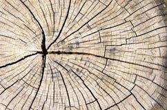 De houten textuur sneed boomboomstam Royalty-vrije Stock Foto