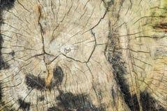 De houten textuur van cutted boomboomstam, close-up Stock Afbeeldingen