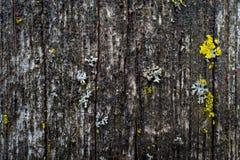 De houten textuur van de grungeschors met de groei Royalty-vrije Stock Foto