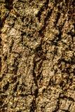 De houten textuur van de oppervlakteschors De oude achtergrond van het schors houten patroon Stock Foto's