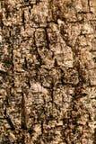 De houten textuur van de oppervlakteschors De oude achtergrond van het schors houten patroon Stock Fotografie