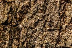De houten textuur van de oppervlakteschors De oude achtergrond van het schors houten patroon Stock Afbeelding
