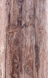 De houten textuur van de pijnboom stock afbeeldingen