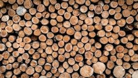 De houten textuurachtergrond heeft vele logboeken die van grote boom en kleine boom snijden Stock Foto's