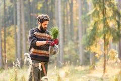 De houtvester plant een pijnboomzaailing royalty-vrije stock foto's