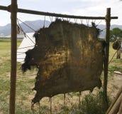De Huid van buffels stock afbeeldingen