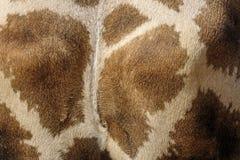 De huid van de giraf Stock Afbeeldingen