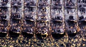 De huid van de krokodil Royalty-vrije Stock Afbeeldingen