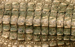 De huid van de krokodil Stock Foto's