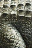 De huid van de krokodil. stock fotografie