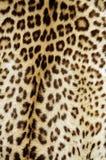 De huid van de luipaard Royalty-vrije Stock Foto