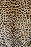 De huid van de luipaard Stock Fotografie