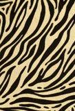 De huid van de luipaard Royalty-vrije Stock Foto's