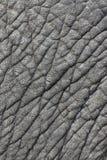 De huid van de olifant Royalty-vrije Stock Fotografie