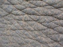 De huid van de olifant Royalty-vrije Stock Afbeeldingen