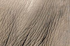 De huid van de olifant Stock Foto