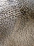 De huid van de olifant Royalty-vrije Stock Foto