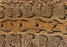 De huid van de slang Royalty-vrije Stock Foto's