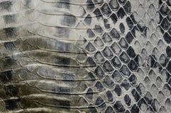 De huid van de slang, reptiel Stock Afbeeldingen