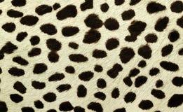 De huid van de tijger Stock Afbeeldingen
